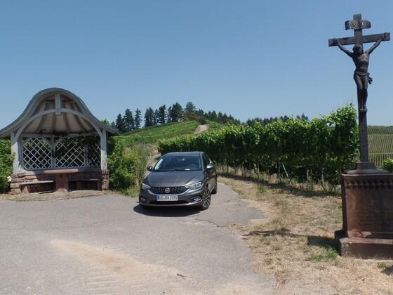 Der Tipo und die Weinberge über Durbach
