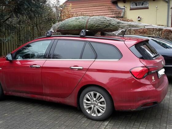 Ein Tipo unterm Weihnachtsbaum...